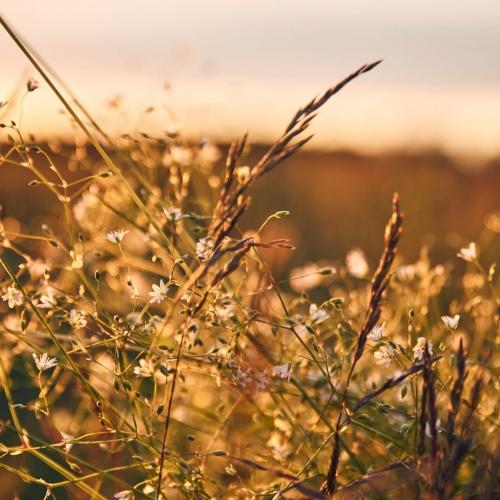 Latvijas ārstniecības augu smaržu degustācija
