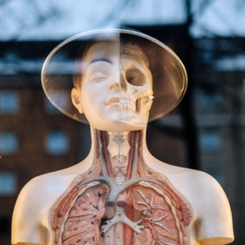 """""""Cilvēks – superorganisms"""" jeb stāsti par mikrobiomu"""